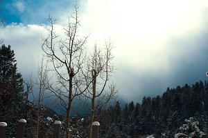 Scenic view in Colorado