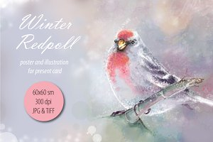 Winter Redpoll poster