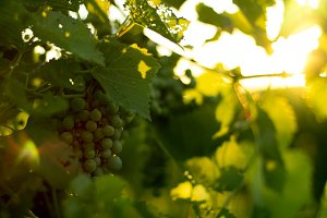 Sunset on Grapes