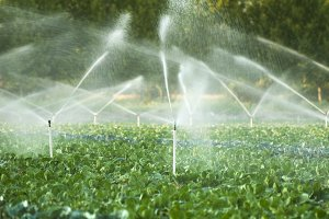 Irrigation systems in a vegetable ga