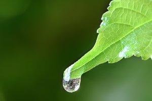 water rain drop on fresh green leaf