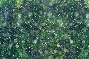 Snow fall forest new year background long banner