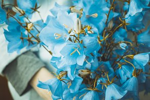 Campanula bouquet