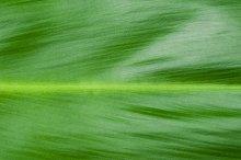 Natural background of green leaf