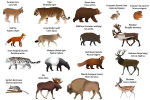 Animals of Eurasia