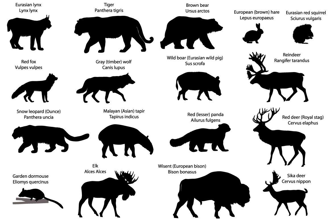 silhouettes of animals of eurasia illustrations creative market