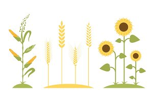 Wheat field. Sunflower icon cartoon.
