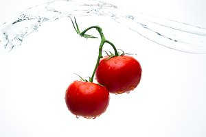Red tomatoes on a branch with drops of water on a white background