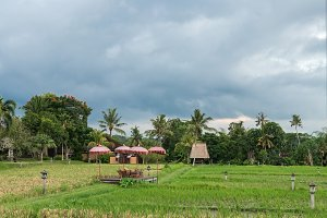 Restaurant facing the rice fields in Bali, Indonesia. Traditional Balinese restaurant facing the rice fields.
