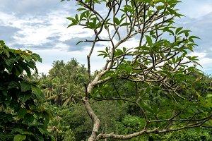 Tropical Rainforest Landscape, Bali island, Indonesia.