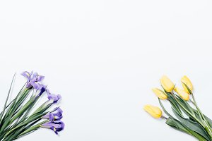 Purple irises and yellow tulips