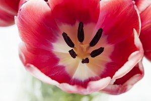 Bouquet of beautiful pink tulips in vase