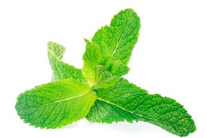 Mint isolated