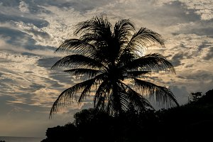 Palm tree at susnset time on a tropical Bali island, Indonesia.
