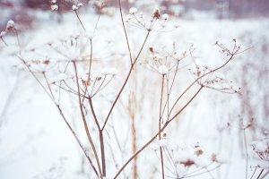 Snow flowers # 1
