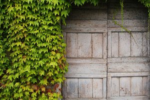 Wooden door with green leaves