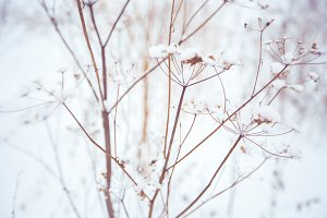 Snow flowers # 2