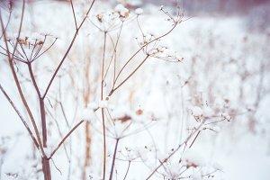 Snow flowers # 3