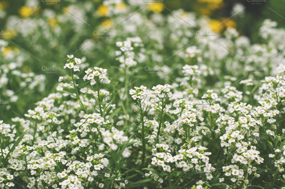 Tiny white flowers nature photos creative market tiny white flowers mightylinksfo