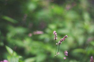 little lavender blooms
