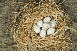 Organic domestic white eggs in straw