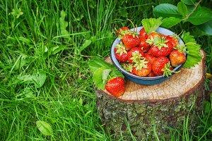 Strawberries in Metal bowl in the garden
