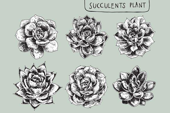 Set Of Succulents Plant