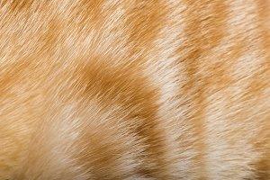 Orange skin of cat