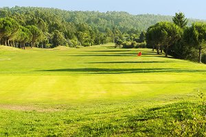 green in golf course