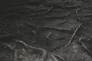 Mystic Wood Roots. Artwork