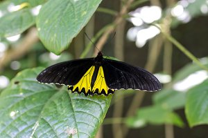 Beautiful exotic tropical butterfly in the park of Bali island, Indonesia.