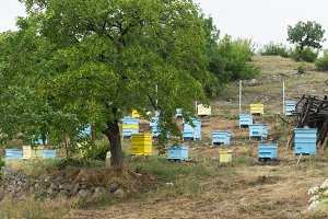 Meadow with bee hives