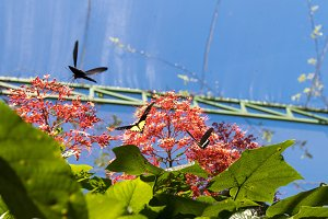 Beautiful butterfly outoodrs in the park of tropical Bali island, Indonesia. Exotic butterfly.