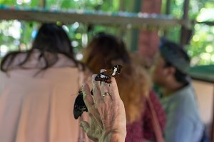 Butterfly on hand in the butterfly park of Bali island, Indonesia.