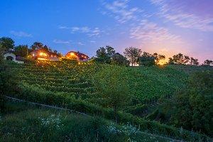 Vineyard in Slovenia at night
