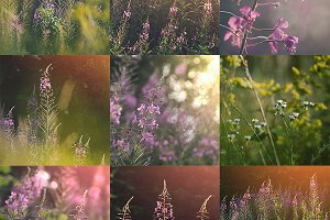 Soft Summer Wildflowers Collection
