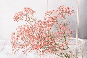 Bunch of pink Gypsophila