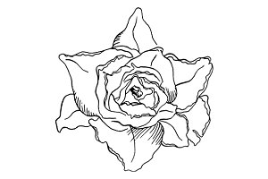 Rose flower sketched art vector