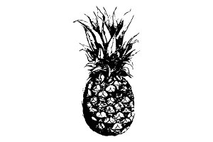 Pineapple fruit sketched art vector
