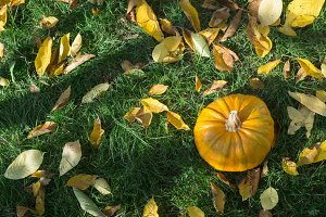 Pumpkin on grass and autumn leaves