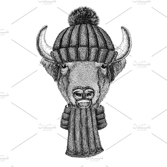 Buffalo Bison Ox Bull Wearing Knitted Hat And Scarf