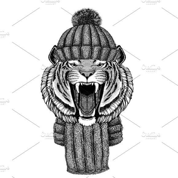Wild Tiger Wearing Knitted Hat And Scarf