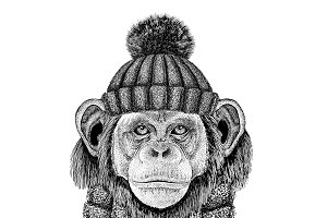 Chimpanzee Monkey wearing knitted hat and scarf