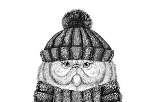 Portrait of fluffy persian cat wearing knitted hat and scarf