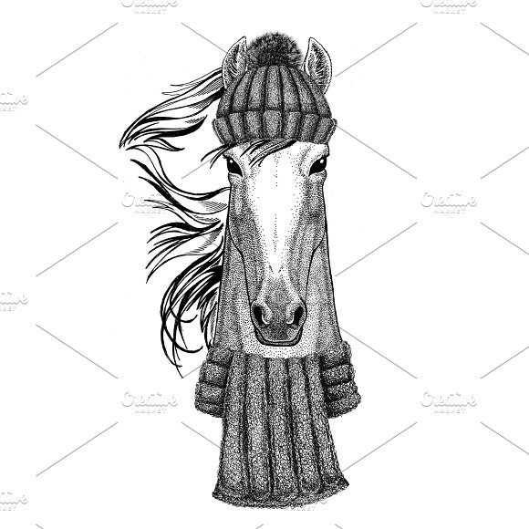 Horse Hoss Knight Steed Courser Wearing Knitted Hat And Scarf