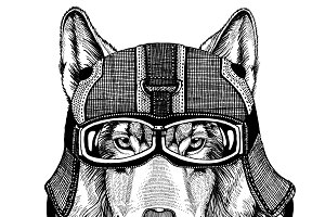 Wolf Dog wearing motorcycle helmet, aviator helmet Illustration for t-shirt, patch, logo, badge, emblem, logotype Biker t-shirt with wild animal