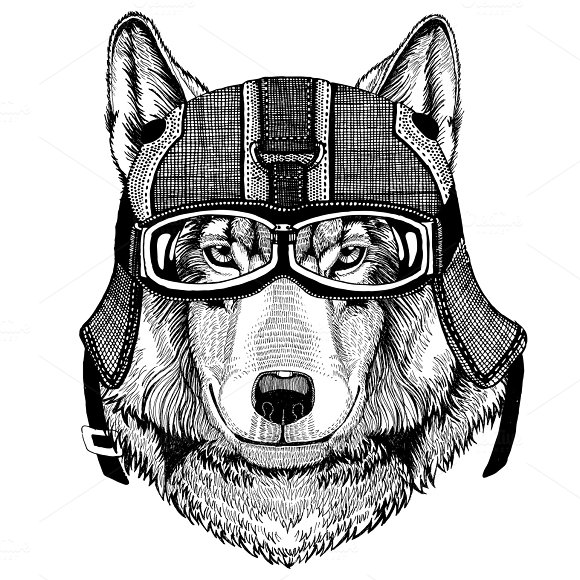 Wolf Dog Wearing Motorcycle Helmet Aviator Helmet Illustration For T-shirt Patch Logo Badge Emblem Logotype Biker T-shirt With Wild Animal