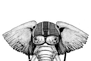 African or indian Elephant wearing motorcycle helmet, aviator helmet Illustration for t-shirt, patch, logo, badge, emblem, logotype Biker t-shirt with wild animal