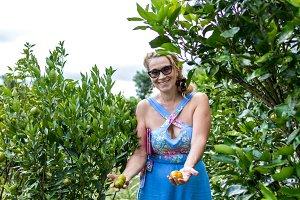 Woman holding mandarin orange fruit in the garden. Mandarin plantation, tropical Bali island, Indonesia.