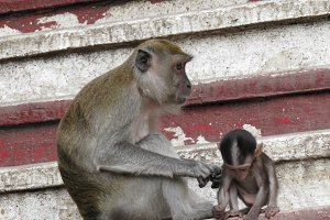 Mother and baby monkey